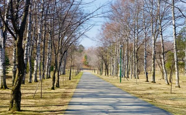 春の陽気に誘われて、走る。