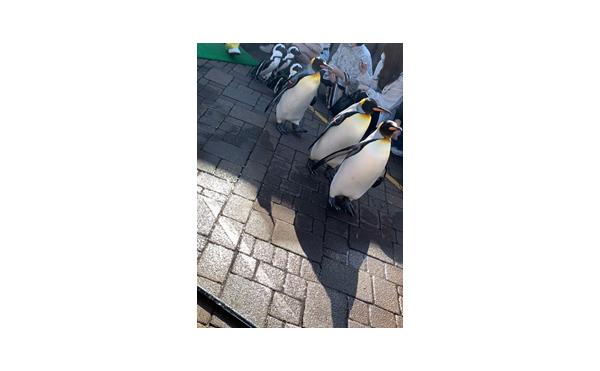 【北海道のオススメ】1万匹のイワシ!!登別マリンパークニクス