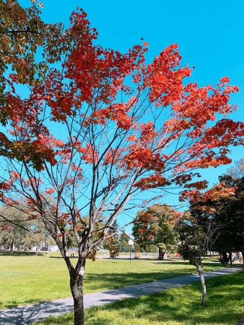 秋晴れブラ散歩。