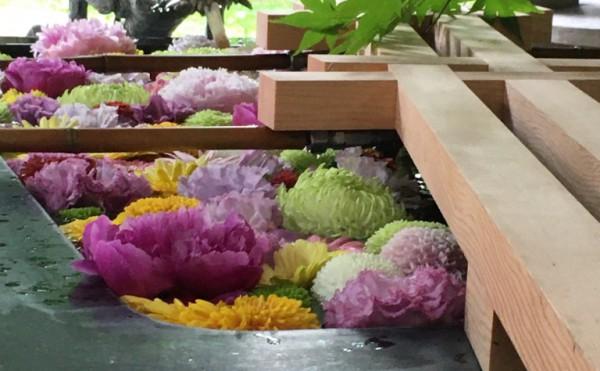 【十勝のオススメ】夏詣と花手水(帯廣神社)