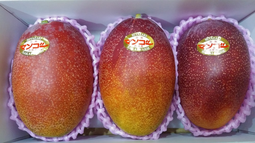 ふるさと納税でマンゴーが…