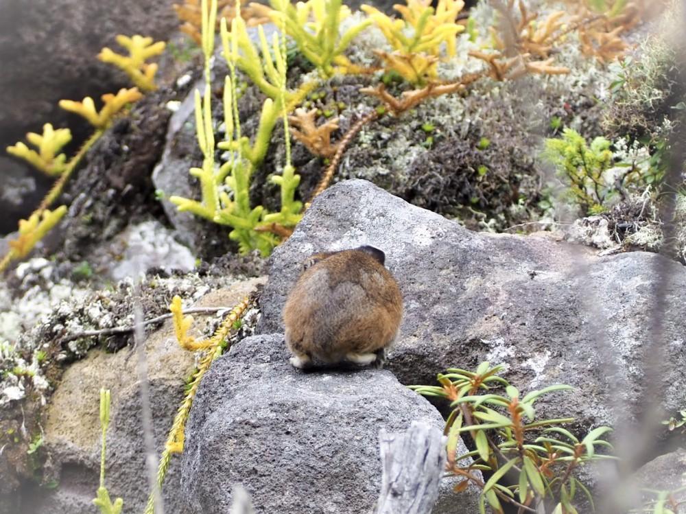 【十勝のオススメ】北海道だけで会うことができるウサギ